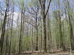 Posypové soli ovlivňují lesy také během léta