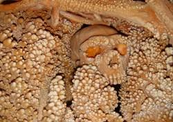 Nejstarší neandertálská DNA pochází z Itálie
