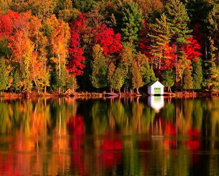 http://21stoleti.cz/wp-content/uploads/autumn_leaves2.jpeg