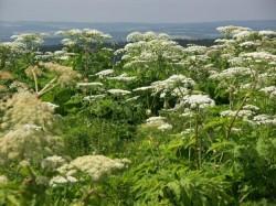 Vědci evidovali více než 13 000 zdomácnělých rostlinných druhů