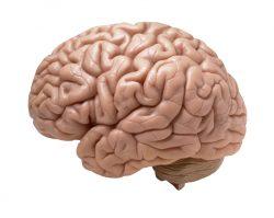 Objev českých vědců pomůže lépe porozumět schizofrenii i fungování mozku