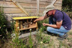 K návratu divokých včel přispívají i hmyzí hotely