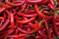 Kapsaicin z chilli papriček tlumí bolest