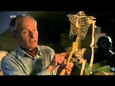 Dar řeči měli i neandertálci