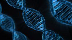 Jakým způsobem reagují buňky na poškození DNA?