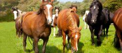 Koně dokážou komunikovat pomocí symbolů