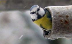 Proč ptáci vyhledávají lidskou společnost?