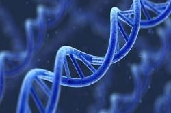 Švýcaři zjistili, jak se přenášejí genetické vady