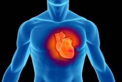 Většina srdečních buněk vzniká vdětství