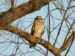Ptačí park přitahuje živočichy