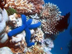Ústí Amazonky skrývalo obrovský korálový útes