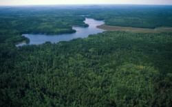 Lesů i vegetace přibývá