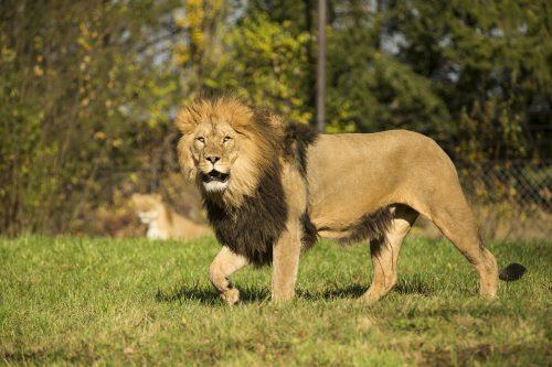 V dvorské zoo se chystá vše na otevření Africké safari!