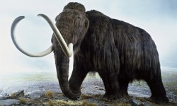 Vědci rozluštili kompletní genom mamuta
