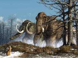 Odkud známe podobu vyhynulých zvířat?