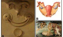 Michelangelo do svých obrazů ukrýval symboly ženské anatomie
