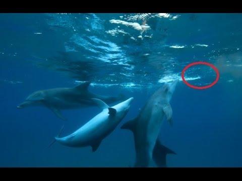 Mladí delfíni experimentují s drogami