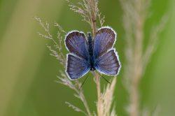 V Milovicích se začínají objevovat vzácné druhy rostlin a živočichů