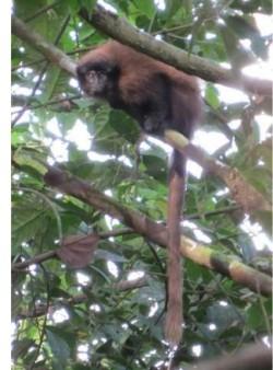Objeven nový druh primáta
