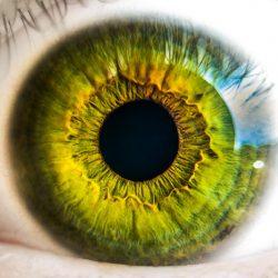 Vědci se zaměřili na mutace způsobující dědičnou degeneraci oční sítnice
