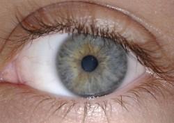 Čeští vědci objevili gen vedoucí ke slepotě