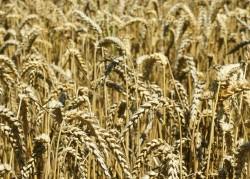 Čeští vědci vyvinuli nová specifická hnojiva