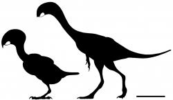 Na ostrově v Bajkalu našli fosílii papouška