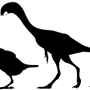 papoušek a oviraptorosaur