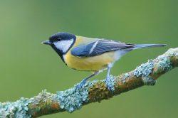 Nová studie: Jak se v ptácích zrcadlí kvalita životního prostředí?