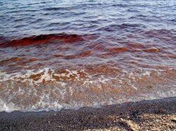 Nebezpečné moře u Kanárských ostrovů?