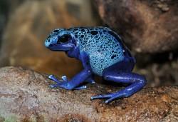Blíží se masivní vymírání žab