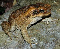 Jaké nepůvodní druhy způsobují největší škody?