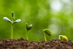 Rostliny vidí, slyší i cítí
