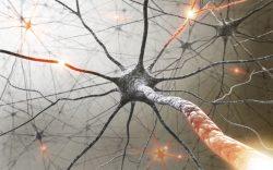Na výzkumu roztroušené sklerózy se významně podílejí i čeští vědci