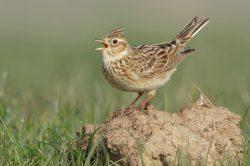 Ptáci v ČR stále ubývají, zejména na polích a loukách