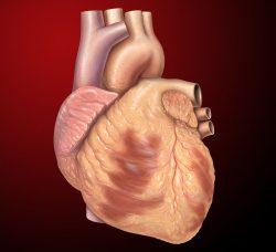 Záplaty z kmenových buněk opraví poškozené srdce