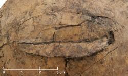 Neolitický masakr v Evropě