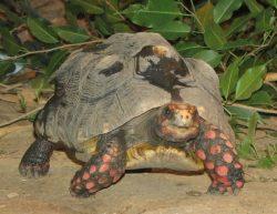 V Zoo Praha se uskuteční den chovatelů želv