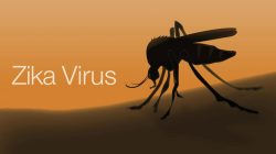 Virus Zika se vrací. A je nebezpečnější než dřív